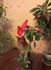 1373 X 1885 515.2 Kb 1294 X 1861 505.5 Kb Веточка для Коржиков.и абиссинских кошек