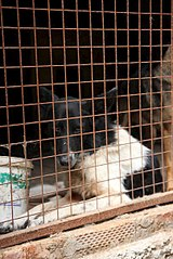 403 X 604 68.5 Kb 403 X 604 56.3 Kb 403 X 604 54.1 Kb Официальная тема приюта 'Кот и Пёс': наши питомцы ждут любой помощи! и свою семью!