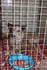 403 X 604 73.1 Kb Официальная тема приюта 'Кот и Пёс': наши питомцы ждут любой помощи! и свою семью!