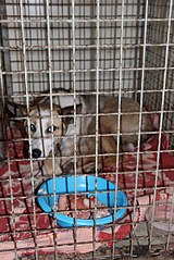 403 X 604 76.3 Kb 403 X 604 73.1 Kb Официальная тема приюта 'Кот и Пёс': наши питомцы ждут любой помощи! и свою семью!