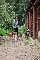 403 X 604 89.2 Kb Официальная тема приюта 'Кот и Пёс': наши питомцы ждут любой помощи! и свою семью!
