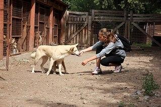 604 X 403 77.1 Kb 403 X 604 54.1 Kb 403 X 604 89.2 Kb Официальная тема приюта 'Кот и Пёс': наши питомцы ждут любой помощи! и свою семью!