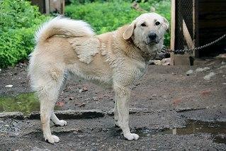 604 X 403  68.6 Kb Официальная тема приюта 'Кот и Пёс': наши питомцы ждут любой помощи! и свою семью!