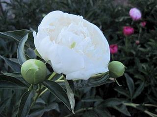 1920 X 1440 641.4 Kb Цветы