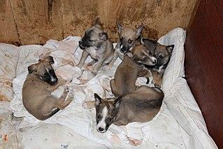 1280 X 853 223.0 Kb Официальная тема приюта 'Кот и Пёс': наши питомцы ждут любой помощи! и свою семью!