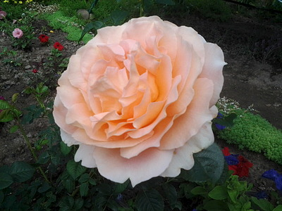 640 X 480 143.1 Kb Цветы