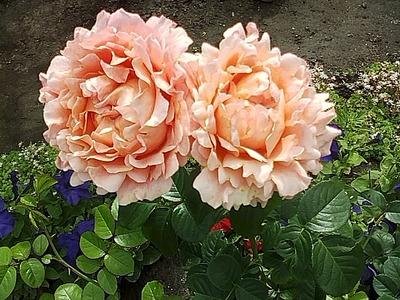 640 X 480 157.8 Kb Цветы