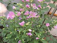 1920 X 1440 686.8 Kb 1920 X 2560 463.3 Kb Помогите определить цветок