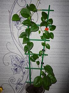 1920 X 2560 453.8 Kb Помогите определить цветок