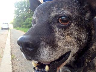 1153 X 865  85.5 Kb Боря, сбитая собака, Авангардная, скорее всего не будет видеть