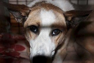 604 X 403 40.0 Kb 604 X 403 34.6 Kb Официальная тема приюта 'Кот и Пёс': наши питомцы ждут любой помощи! и свою семью!
