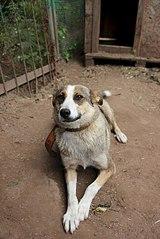 403 X 604 55.4 Kb 604 X 379 41.0 Kb Официальная тема приюта 'Кот и Пёс': наши питомцы ждут любой помощи! и свою семью!