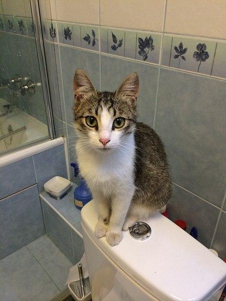 720 X 960 115.3 Kb Молодой котик ищет дом