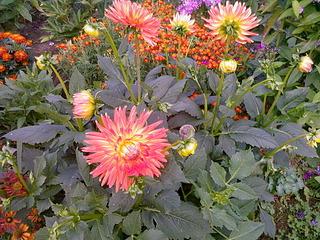 1920 X 1440 446.8 Kb Цветы