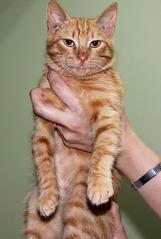 1205 X 1795 228.8 Kb Передержка для животных Пес Барбос отдает животных и принимает кошек на лето!