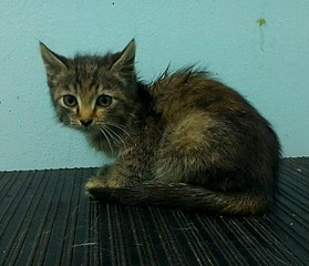 1280 X 1100 347.1 Kb 1280 X 766 229.6 Kb 1280 X 766 230.0 Kb Передержка для животных Пес Барбос отдает животных и принимает кошек на лето!