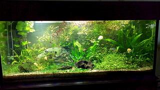 1920 X 1080 978.2 Kb Какой у вас аквариум?