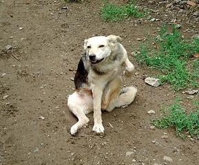 800 X 664 257.9 Kb Официальная тема приюта 'Кот и Пёс': наши питомцы ждут любой помощи! и свою семью!