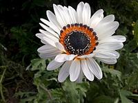 1920 X 1440 609.0 Kb Цветы