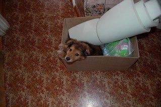 604 X 402 57.8 Kb Официальная тема приюта 'Кот и Пёс': наши питомцы ждут любой помощи! и свою семью!