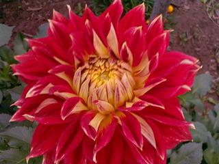 1920 X 1440 510.8 Kb Цветы