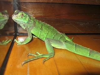 320 x 240 рептилии и прочая экзотика