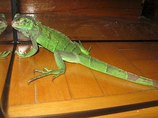 320 x 240 320 x 240 рептилии и прочая экзотика