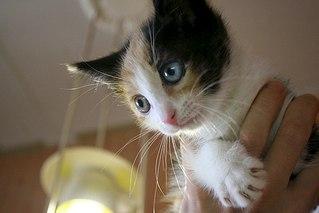 604 X 403 33.0 Kb котята ищут дом!