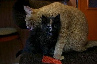 604 X 403 36.6 Kb котята ищут дом!