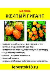 1920 X 2713 592.7 Kb Саженцы роз, флоксов, хризантем, дельфиниумов и других многолетников от 60 руб.
