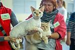 150 x 100 Девон рекс - эльфы в мире кошек - у нас есть котята