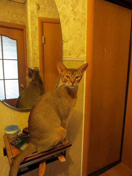 1488 X 1984 635.7 Kb Веточка для Коржиков.и абиссинских кошек