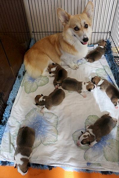 1920 X 2880 416.6 Kb Веточка для Коржиков.и абиссинских кошек у нас есть щенки и котята