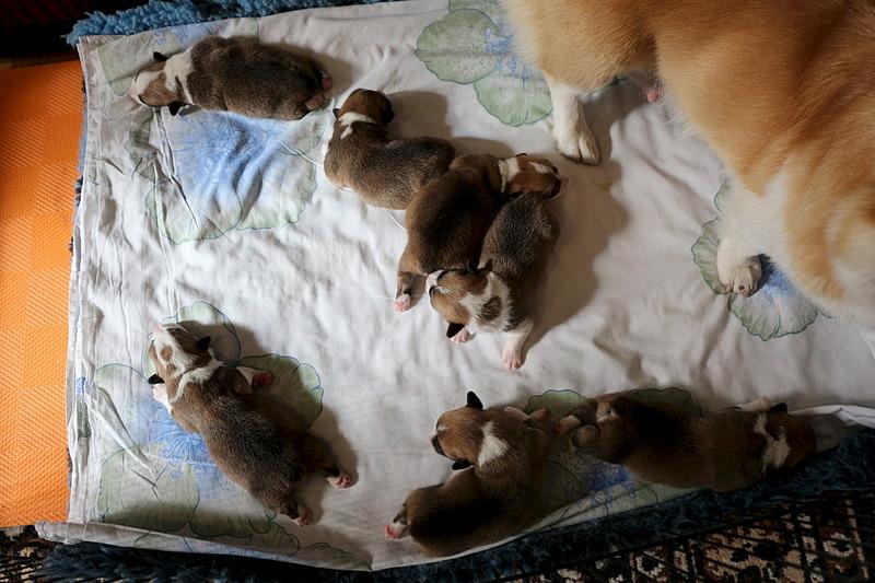 1920 X 1280 598.2 Kb Веточка для Коржиков.и абиссинских кошек у нас есть щенки и котята