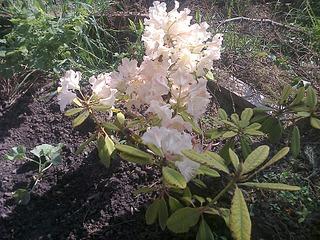 1920 X 1440 1022.2 Kb Растения-экзоты в саду