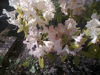 1920 X 1440 698.3 Kb Растения-экзоты в саду