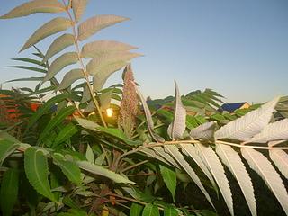 1920 X 1440 619.3 Kb Растения-экзоты в саду