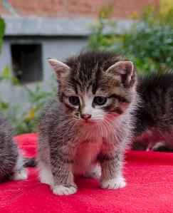 1622 X 2000 290.0 Kb Малышастики котятки СРОЧНО ищут дом.