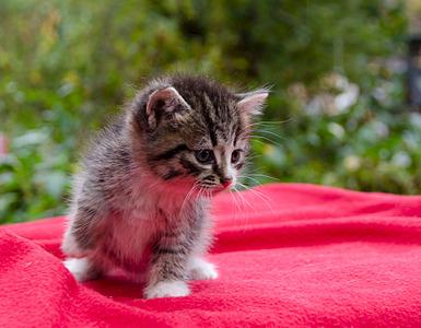 1920 X 1493 678.5 Kb 1920 X 1783 675.9 Kb 1622 X 2000 290.0 Kb Малышастики котятки СРОЧНО ищут дом.