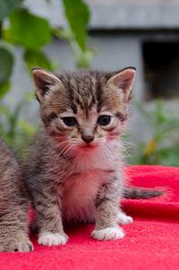 1325 X 2000 224.5 Kb Малышастики котятки СРОЧНО ищут дом.