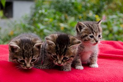 1920 X 1271 551.4 Kb Малышастики котятки СРОЧНО ищут дом.