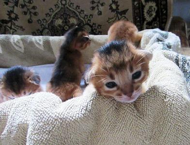 1433 X 1096 385.2 Kb 1920 X 1440 569.8 Kb 1920 X 1440 487.9 Kb Веточка для Коржиков.и абиссинских кошек у нас есть щенки и котята