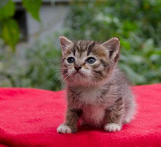 1920 X 1754 744.0 Kb Малышастики котятки СРОЧНО ищут дом.