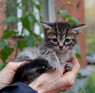 1920 X 1887 293.1 Kb Малышастики котятки СРОЧНО ищут дом.