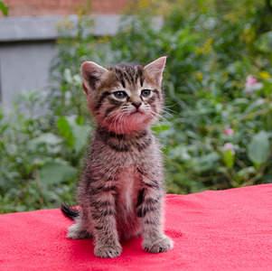 1920 X 1911 847.2 Kb Малышастики котятки СРОЧНО ищут дом.