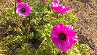 1632 X 920 1011.5 Kb Цветы