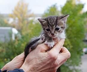 1243 X 1024 196.2 Kb Малышастики котятки СРОЧНО ищут дом.
