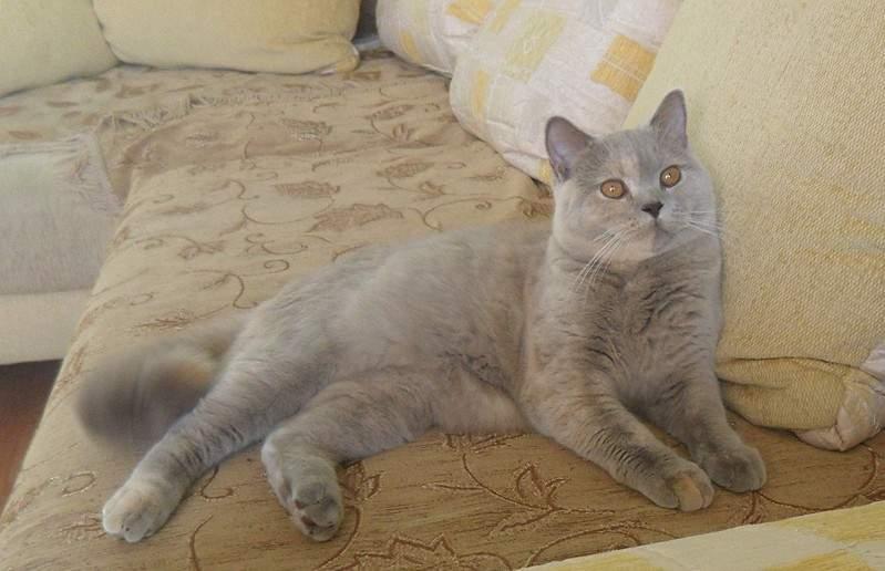 1920 X 1240 406.4 Kb 1920 X 1240 560.6 Kb 1896 X 1321 390.4 Kb Питомник британских кошек Cherry Berry's