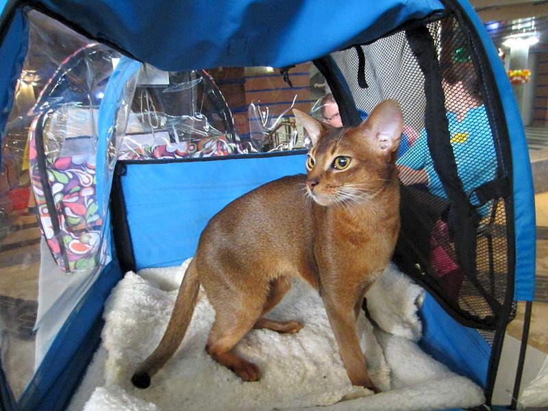 1920 X 1440 664.5 Kb 1920 X 1440 567.8 Kb 1920 X 1440 597.3 Kb Веточка для Коржиков.и абиссинских кошек у нас есть щенки и котята
