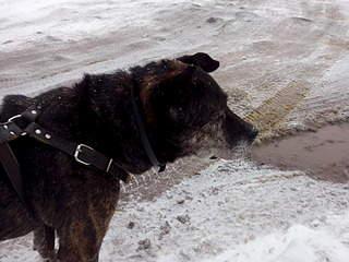 1920 X 1440 700.4 Kb Боря, сбитая собака, Авангардная, скорее всего не будет видеть